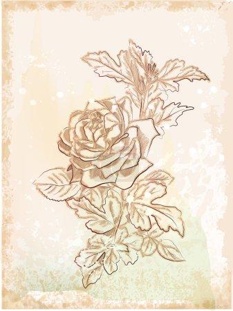 Hand drawn vintage sketch of rose