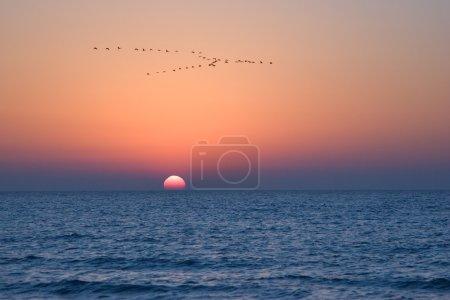 Cranes above the sea.