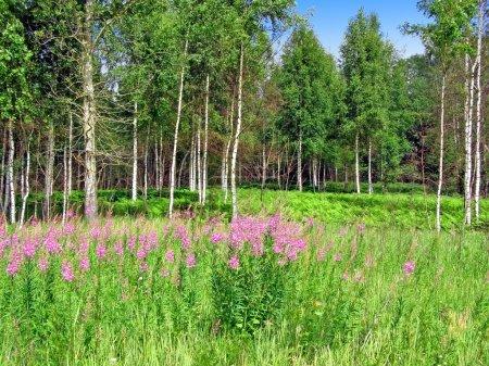 Photo for Mauve flowerses near wood - Royalty Free Image