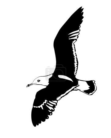 Vector silhouette flying sea gulls on white backgr...