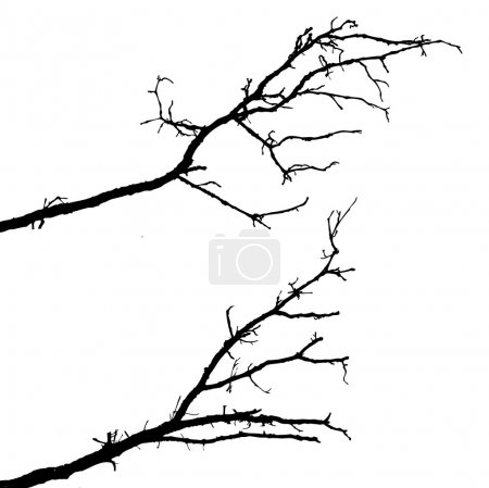 Illustration for Vector silhouette of the branch tree on white background - Royalty Free Image