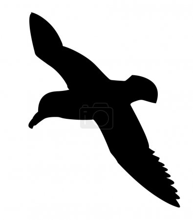 Vector silhouette of the sea bird on white backgro...