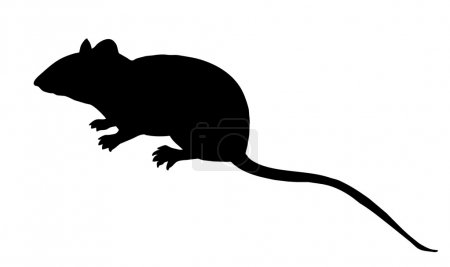 vector silhouette mouse on white background