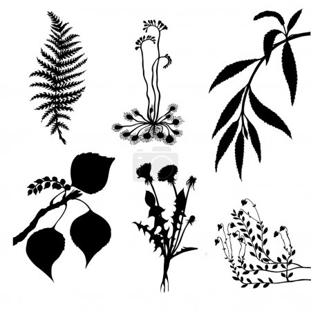 vector set of the plants on white background