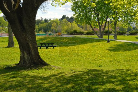 Photo for City park summer view with trees, green grass with yellow dandelions, benches and table for resting - Royalty Free Image