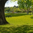 City park summer view with trees, green grass with...