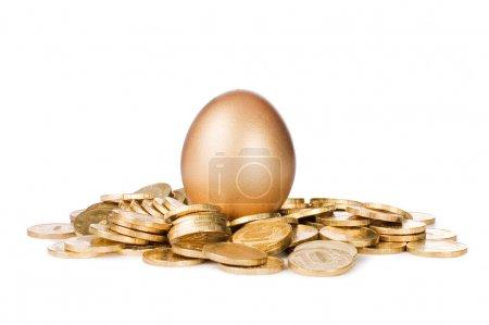 Gold egg in golden coins on white...