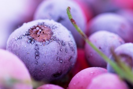 Photo for Macro view of frozen berries: blackcurrant, redcurrant, blueberry - Royalty Free Image