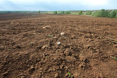 Photo for Brown agricultural soil of a field - Royalty Free Image