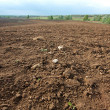 Brown agricultural soil of a field...