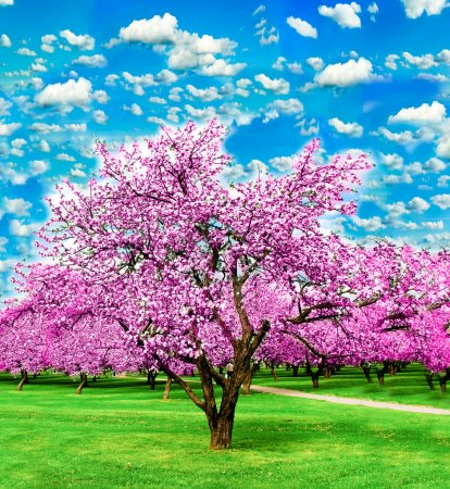Blooming apple trees over vivid cloudy sky in the garden