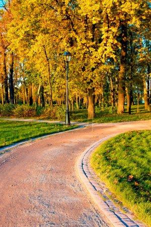 Autumn golden alley