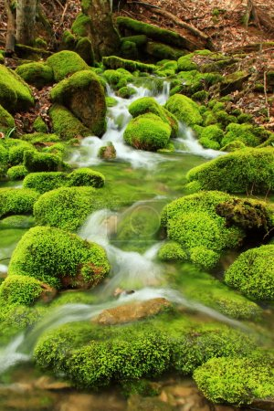 Photo for Mountain stream among the mossy stones - Royalty Free Image