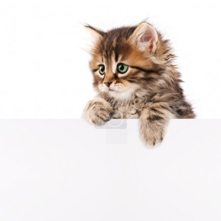 Pretty kitten peeking out of a blank sign