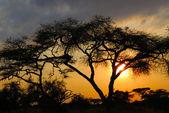 Africké slunce