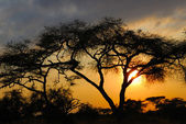 Afrikai naplemente
