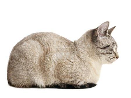 Cat over white