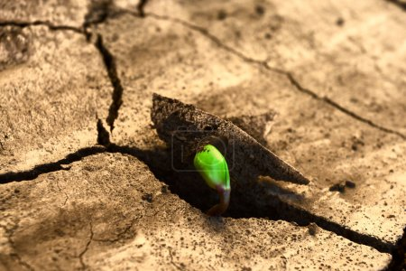 Photo for Concept new life. Rising sprout on dry ground. - Royalty Free Image