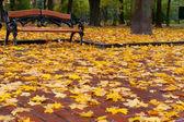 Autumn park. Rainy weather