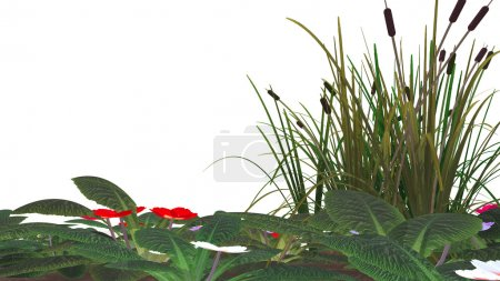 Cane, flowers & marsh grass isolated
