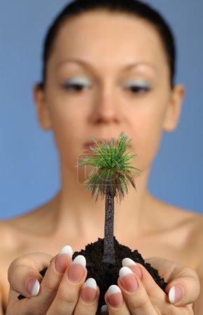 Photo pour La femme tient dans ses mains le sol avec un palmier. Concentration sélective. Un fond bleu - image libre de droit