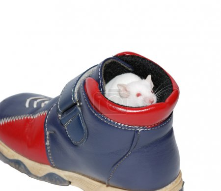 White mouse in boot
