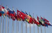 Egyesült zászlók