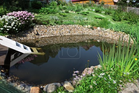 Photo for Aquatic garden in a home backyard - Royalty Free Image