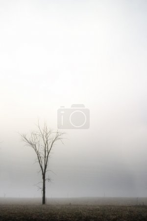 Photo for A single tree in the fog. - Royalty Free Image