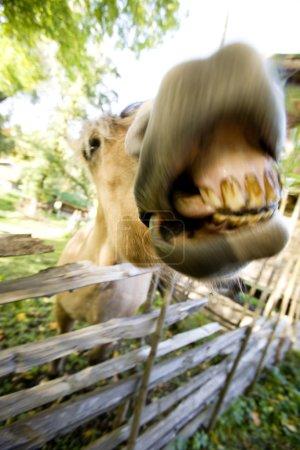 Photo pour Un cheval fou avec flou de mouvement pour ajouter à la folie  :) - image libre de droit