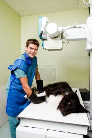Vet X-ray