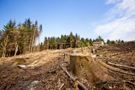 Photo for A clear cut block with a tree stump in the foreground - Royalty Free Image