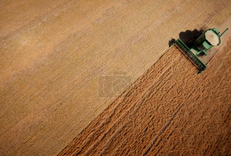 Photo for Abstract view of a combine harvesting lentils in a large field - Royalty Free Image