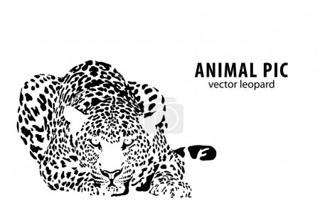 Illustration for Vector illustration of a leopard on white background - Royalty Free Image