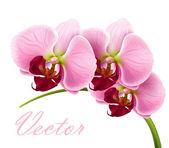 Vektorové orchidej květina blahopřání