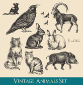 Retro / vintage graphics animals set - raven cats flying birds rabbits boar goat