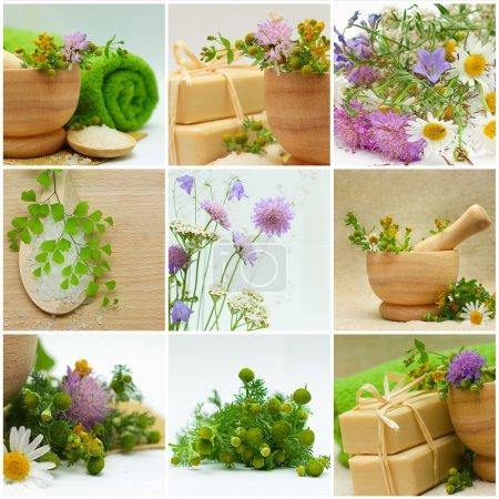 Photo pour Collage - Médecine alternative et traitement à base de plantes - image libre de droit