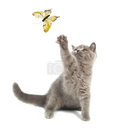 Cute kitten playing with a butterfly...