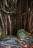 Dark background of tree roots