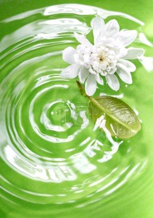 Photo pour Fleur et feuille coulant dans le liquide vert comme symbole de la nature. Faible profondeur de champ ajoutée par l'objectif macro pour une vue naturelle - image libre de droit