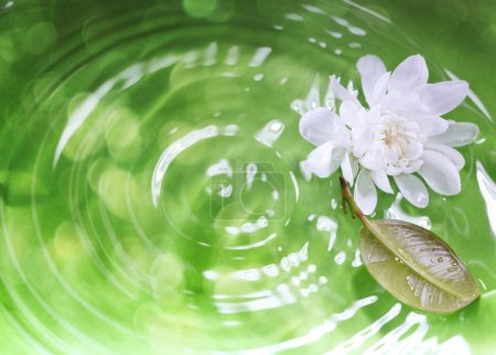 Photo for White flower and leaf on a green liquid background with ripples and reflections. Close-up photo. Shallow depth of field added for natural view - Royalty Free Image