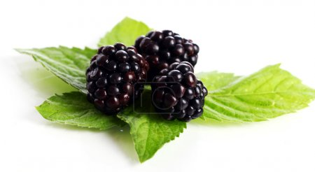 Fresh dewberry with leaves