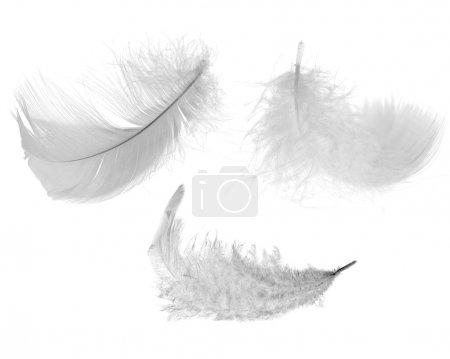 Photo pour Trois plumes blanches isolées sur fond blanc - image libre de droit