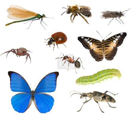 Photo pour Grande collection de différents insectes isolés sur fond blanc - image libre de droit