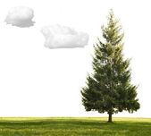 Single fir, grass and clouds