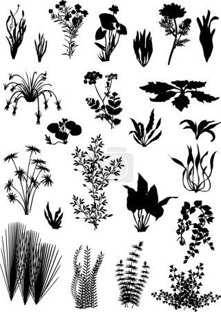 Illustration for Illustration with black on white plants - Royalty Free Image