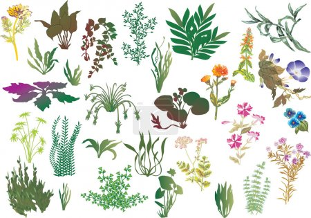 Illustration for Illustration different plants isolated on white background - Royalty Free Image