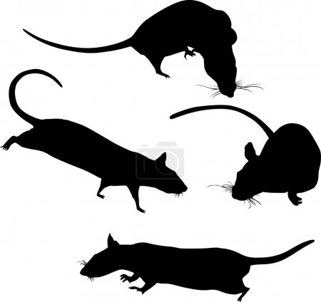 silhouettes of four rats