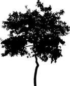 silhouette of broad-leaved tree