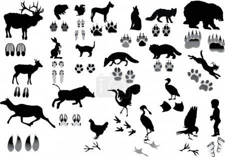 Illustration for Illustration with animals and its tracks isolated on white - Royalty Free Image